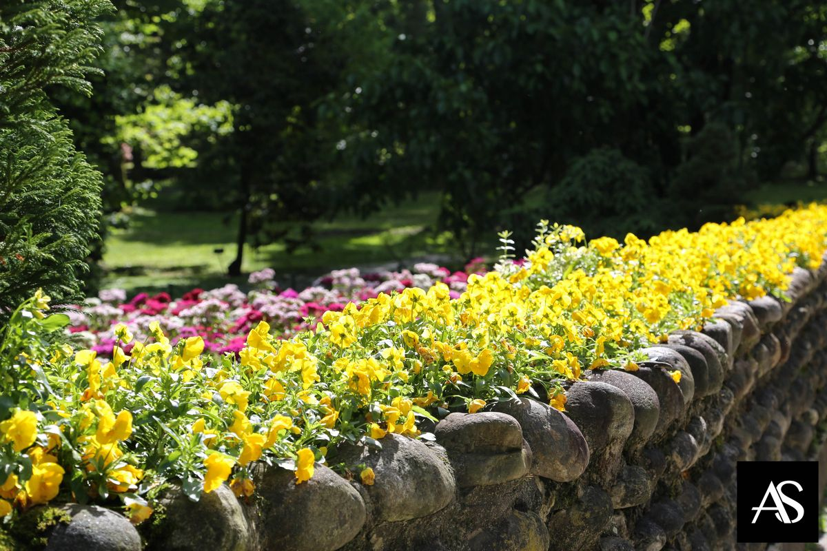 Villa Taranto, il giardino più bello del mondo